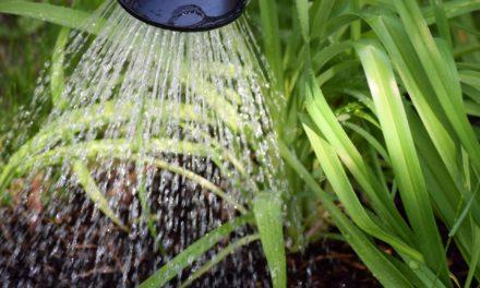 """Gießwasserversorgung in den städtischen Kleingärten """"Weid"""" und """"18 Morgen"""""""