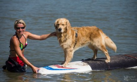 "<span class=""entry-title-primary"">Let´s dog surfing!</span> <span class=""entry-subtitle"">Von Hundesurfen profitiert fast jeder Hund</span>"