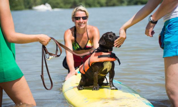"""<span class=""""entry-title-primary"""">Let´s dog surfing!</span> <span class=""""entry-subtitle"""">Hundesurfen kann zu einer neuen Art der Beschäftigung mit dem Hund werden</span>"""