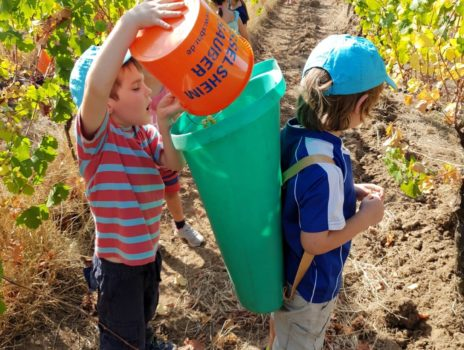 Kinder besuchen Veltens Weinberg