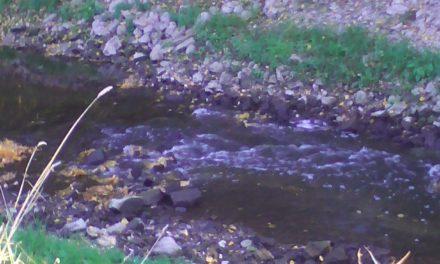 Der Schwarzbach in Ginsheim wird zum reißenden Fluss