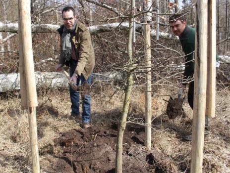 Rüsselsheim vertraut den Selbstheilungskräften des Waldes