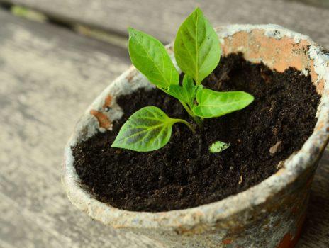 Lindenschule – Garten-AG freut sich über Pflanzenspenden