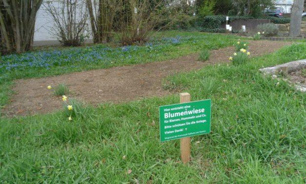 Im Kräutergarten Marxheim wächst Futter für Bienen, Hummeln und Co