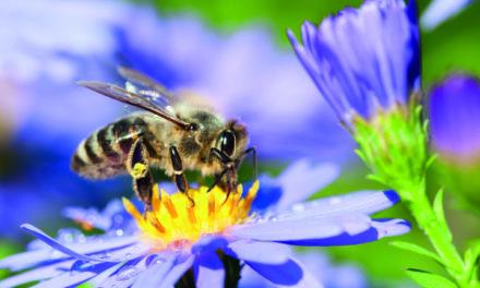 Insektenschutz ist Umweltschutz