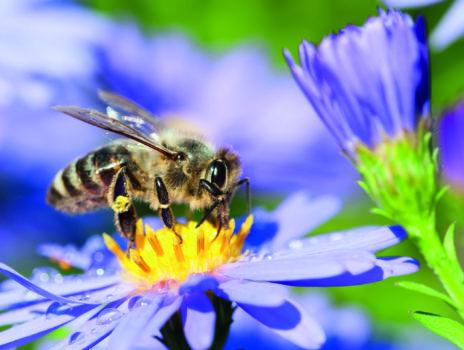 NABU ruft auf zur Insektenzählung