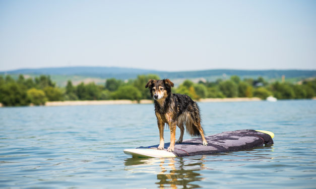 "<span class=""entry-title-primary"">Let´s dog surfing!</span> <span class=""entry-subtitle"">… oder, SUP mit Hund!</span>"