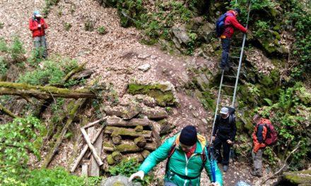 """<span class=""""entry-title-primary"""">30 Kilometer und über 1.000 Höhenmeter galt es zu bewältigen</span> <span class=""""entry-subtitle"""">Quer durch den Binger Wald mit der DAV-Sektion Rüsselsheim</span>"""