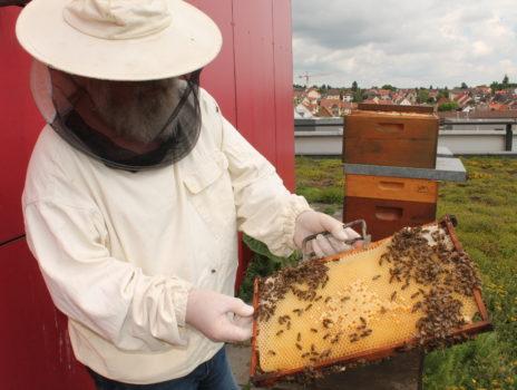 Fairwandeln: Interaktiver Stadtrundgang zur Artenvielfalt in Hofheim
