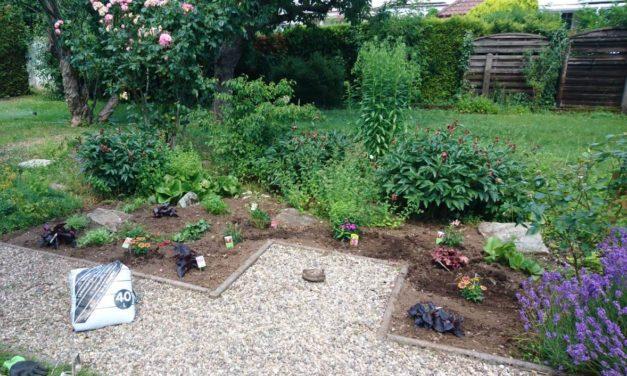 Jugendliche lassen Garten neu aufblühen