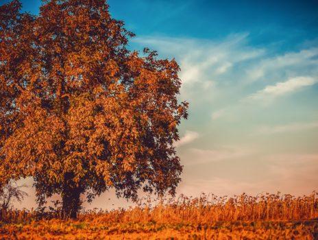 Bäume in Rheinhessen: Geschichte und Geschichten