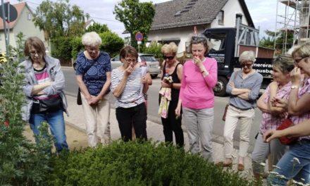 Saisonabschluss: Letzte Führung für 2019 im Hofheimer Kräutergarten