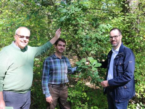 Rüsselsheim schützt seinen Wald