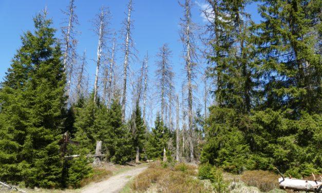 Klimastress lässt Bäume auch im Hofheimer Wald absterben