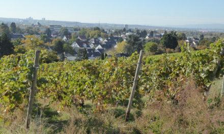 """<span class=""""entry-title-primary"""">Die Geschichte des Weinbaus in Hechtsheim</span> <span class=""""entry-subtitle"""">Neue Broschüre des Vereins Hechtsheimer Ortsgeschichte beleuchtet mehr als 1200 Jahre Weinkultur</span>"""