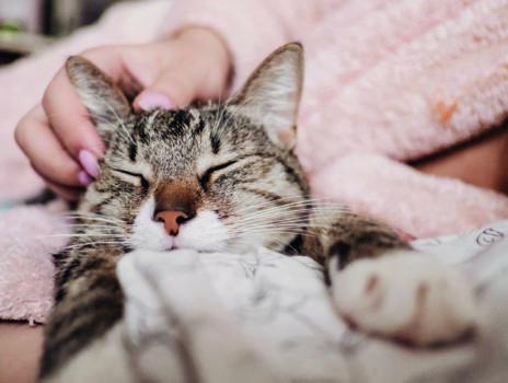 Feiertage mit Haustieren verbringen