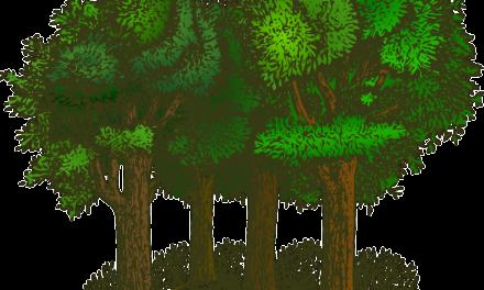 Patenschaft für hundert Bäume