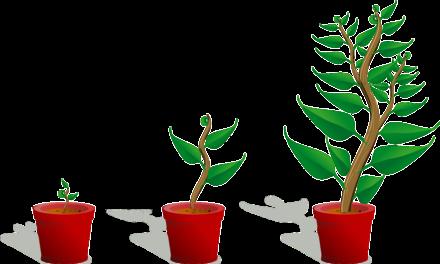Bäume werden nachgepflanzt