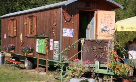 Naturkindergarten Oppenheim sucht FÖJler