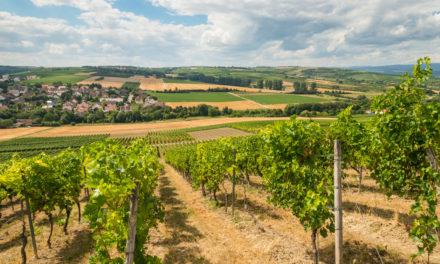 """<span class=""""entry-title-primary"""">Wo ist Rheinhessens """"Schönste Weinsicht 2020""""?</span> <span class=""""entry-subtitle"""">Deutsches Weininstitut lässt wieder über den schönsten Aussichtspunkt abstimmen</span>"""