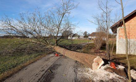 Bäume fällen und Hecken roden nur noch bis Ende Februar erlaubt