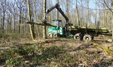 Appell an Waldbesucher: Halten Sie sich an die Absperrungen!