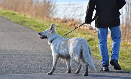 Ab 15. März wieder Hunde-Anleinpflicht wegen Brut- und Setzzeit