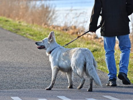 Hunde-Anleinsatzung wegen Hochwasser in Kraft