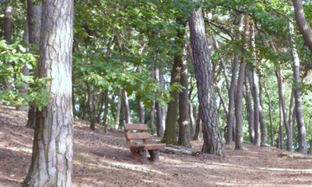 Bürgerstiftung Hofheim: Startschuss für Baumpflanzaktion im Herbst