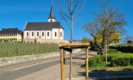 Neubaumpflanzungen im Stadtgebiet Hochheim
