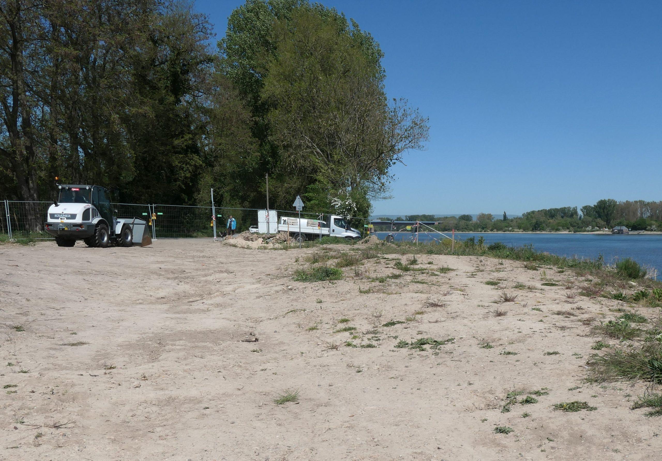 Renaturierung des Laubenheimer Rheinufers