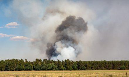 Erhöhte Waldbrandgefahr durch frühe Trockenheit