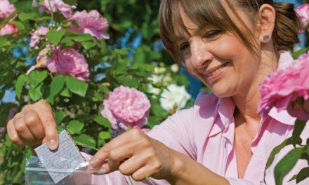 Mit Florfliegen gegen Blattläuse