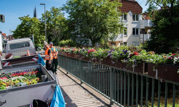 Brückenbepflanzung soll auch 2020 die Menschen erfreuen