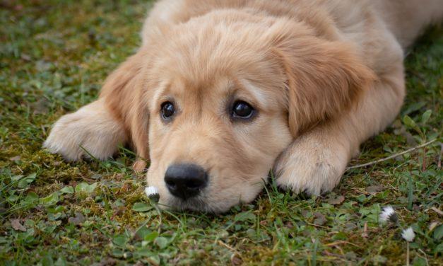 Verein Hundefreunde Hochheim in Vorbereitung zur Öffnung
