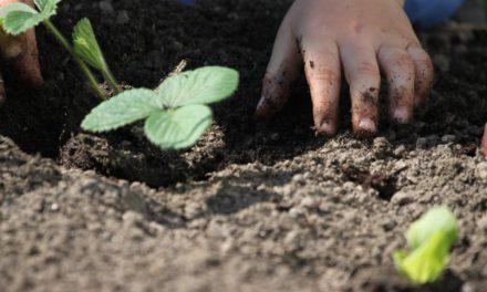 Urban-Gardening: Antragsfrist verlängert