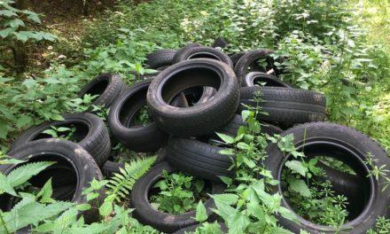 Altreifen im Wald: Baufhof sammelte erneut illegal entsorgten Müll ein