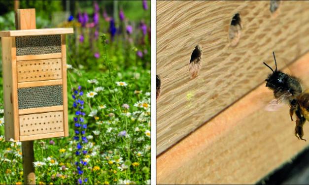 Ein Zuhause für Wildbienen