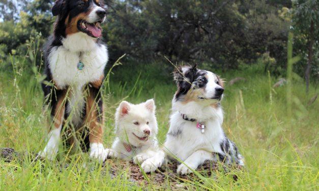 "Kuchen ""to go"" im Doggybag an Fronleichnam bei den Trewwerer-Bunten-Hunden!"