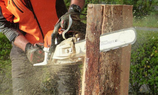 Horlachgraben: Baumpflegemaßnahmen nach Baumkontrollen erforderlich