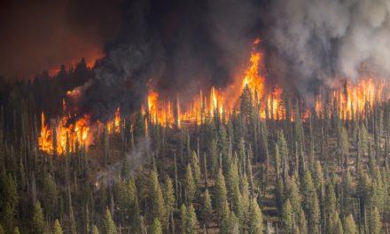 Erhöhte Waldbrandgefahr durch anhaltende Trockenheit