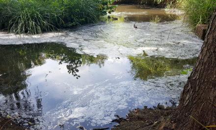 Teich in Stresemannanlage wird biologisch gereinigt