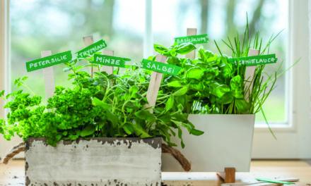 Tipps für den Kräutergarten