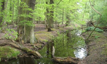 Waldführung am 10. September