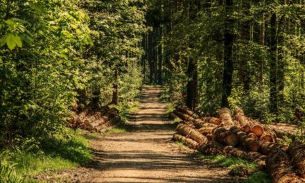 Gute Noten für Rüsselsheimer Stadtwald
