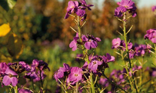 Tipps für die Herbstbepflanzung