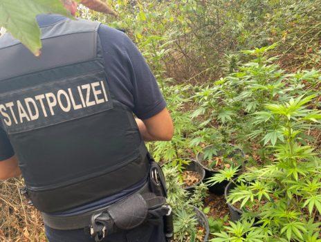 Stadtpolizei entdeckt Cannabisplantage