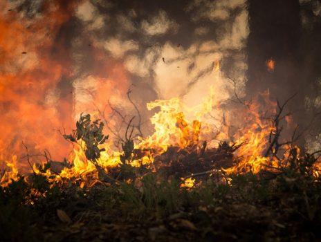 Waldbrand-Warnstufe 4: Grillverbot auf allen öffentlichen Grillplätzen
