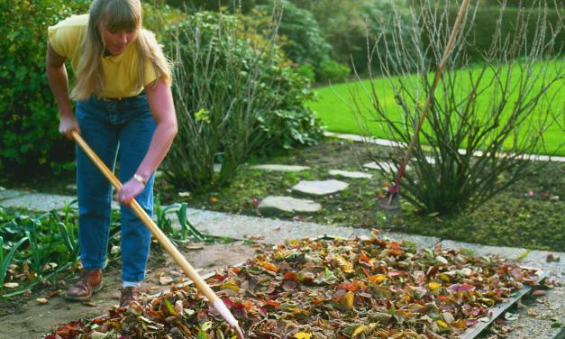 Flächenkompostierung: Wenn Laub zu Humus wird