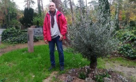 Olivenbäume verschönern Waldfriedhof